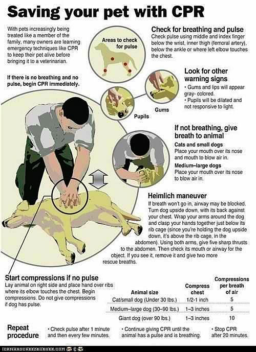Save your pets life with CPR - LAFPOLI