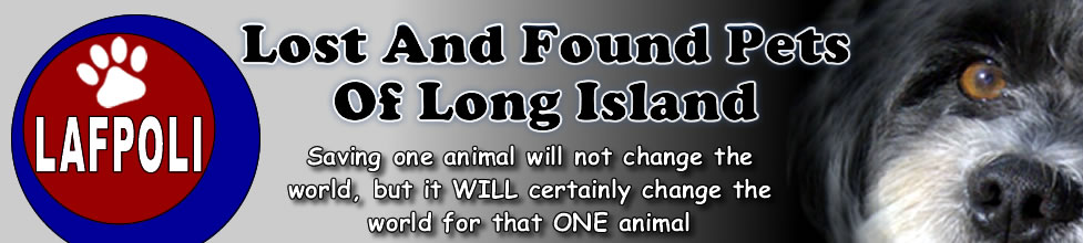 Lost And Found Pets Of Long Island